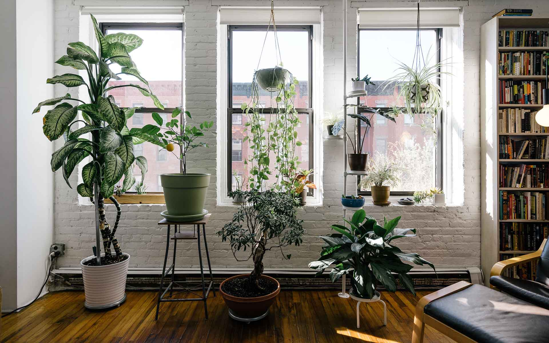 Planting an indoor garden during quarantine